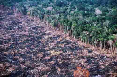 Amazonia arrasada
